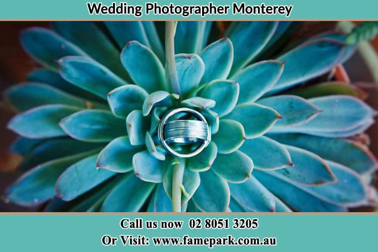 Photo of the wedding ring design at the top of the plant Monterey NSW 2217