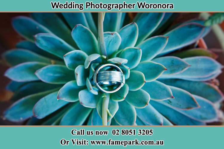 Photo of the wedding ring design at the top of the plant Woronora NSW 2232